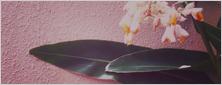 スタッフブログ用の写真